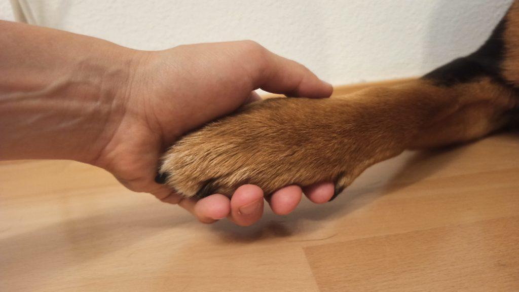 Hunde in der Psychotherapie