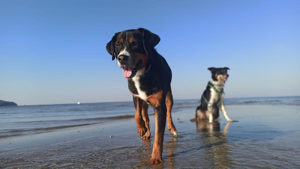 Hundegestuetzte Psychotherapie - Einbehiehung von Hunden